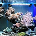 Asvert Lampe Tube Aquarium LED Etanche Submersible 3 Couleurs avec Télécommande Eclairage sous l'Eau pour Poisson 58 x 1,8 cm, 5,8W de la marque Asvert image 4 produit