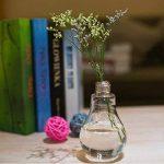 Daorier 6 Pcs Vase Ampoule en Verre Transparent pour Plantes Fleurs Décoration Cadeau Créatif de la marque Daorier image 2 produit