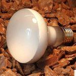 Global E2725W 40W 60W 75W 100W UVA ampoule Reptile Terrarium pour animal domestique Couveuse Chauffage lampe AC220–240V de la marque Global image 3 produit