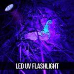 LE Lighting EVER Lampe Torche UV, 12 LED 395nm, Lampe de Poche Ultraviolet, Portable, IPX4 Résistant à Jets d'Eau, avec 3 piles AAA Fournies de la marque Lighting EVER image 1 produit